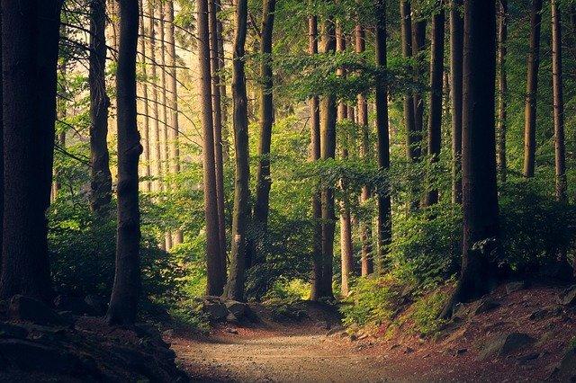sentiero-natura-boschi-di-fiuggi-active-hotels-ciociaria-lazio-trekking